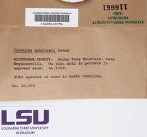 Cladonia robbinsii image