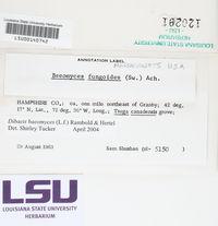 Dibaeis baeomyces image
