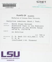 Dactylina ramulosa image
