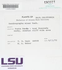 Dendrographa minor image
