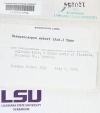 Dermatocarpon luridum image