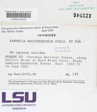 Flavoparmelia baltimorensis image