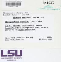 Flavopunctelia soredica image
