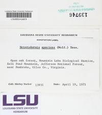 Heterodermia speciosa image