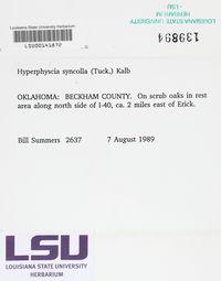 Hyperphyscia syncolla image