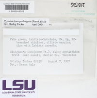 Hypotrachyna prolongata image