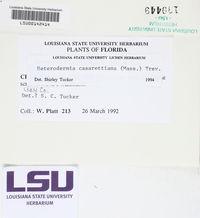 Polyblastidium casarettianum image