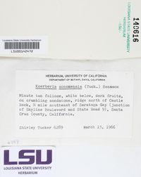 Vestergrenopsis sonomensis image
