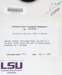 Lecanora polytropa image