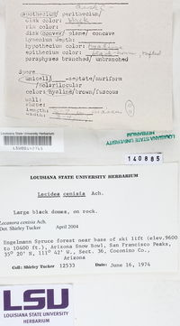 Lecanora cenisia image