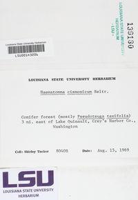 Loxospora cismonica image