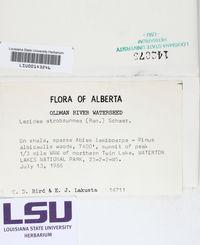 Lecidea atrobrunnea image