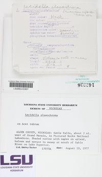 Lecidella elaeochroma image