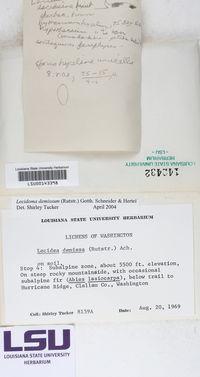 Lecidoma demissum image