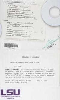 Lopadium pezizoideum image