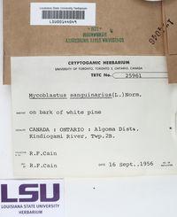 Mycoblastus sanguinarius image