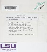 Nodobryoria oregana image