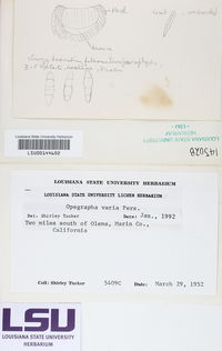 Opegrapha herbarum image
