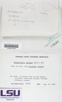 Parmeliopsis ambigua image