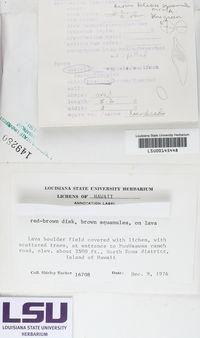 Peltula obscurans var. deserticola image