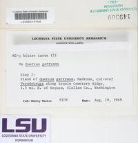 Lepra albescens image
