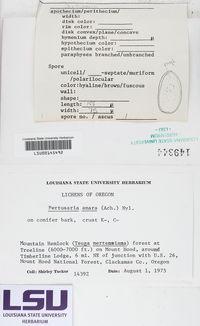 Lepra amara image