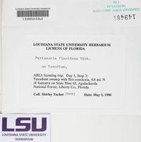 Lepra floridana image