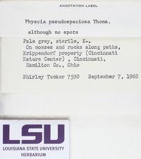 Physcia pseudospeciosa image