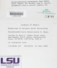 Pseudocyphellaria hawaiiensis image