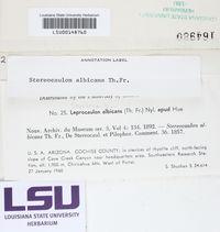 Lepraria albicans image