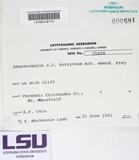 Stereocaulon botryosum image