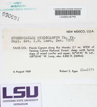 Stereocaulon myriocarpum image