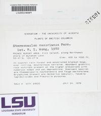 Stereocaulon vesuvianum image