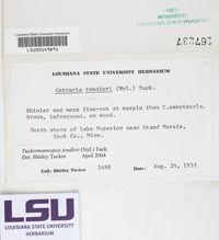 Tuckermanella fendleri image