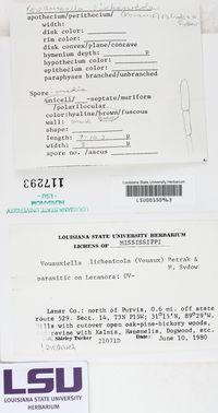 Vouauxiella lichenicola image