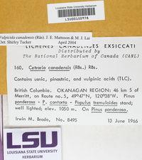 Vulpicida canadensis image
