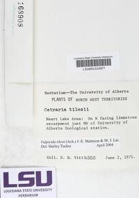 Vulpicida juniperina image