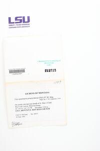 Fuscopannaria praetermissa image