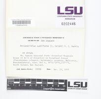 Image of Anisomeridium subbiforme