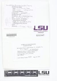 Anisomeridium subbiforme image