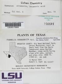 Punctelia subrudecta image