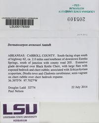 Dermatocarpon arenosaxi image
