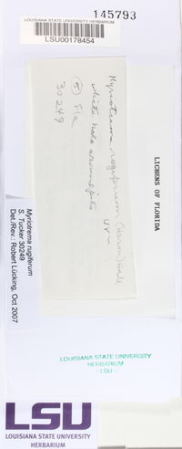 Myriotrema rugiferum image