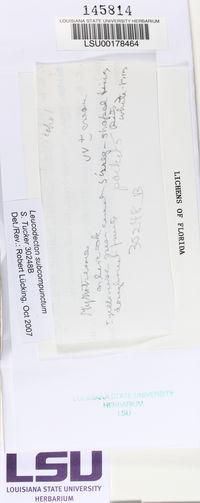 Leucodecton subcompunctum image