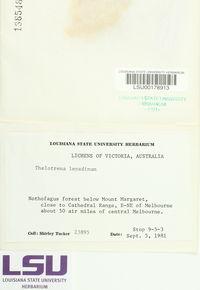 Thelotrema lepadinum image