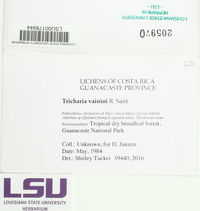 Tricharia vainioi image