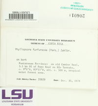 Phyllopsora furfuracea image
