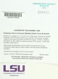 Gyalolechia flavovirescens image
