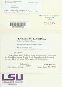 Haematomma americanum image