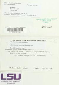 Haematomma guyanense image